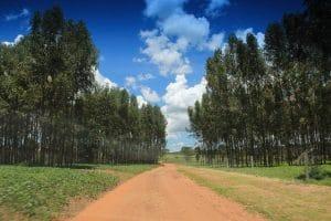 Forestación cambia la economía uruguaya